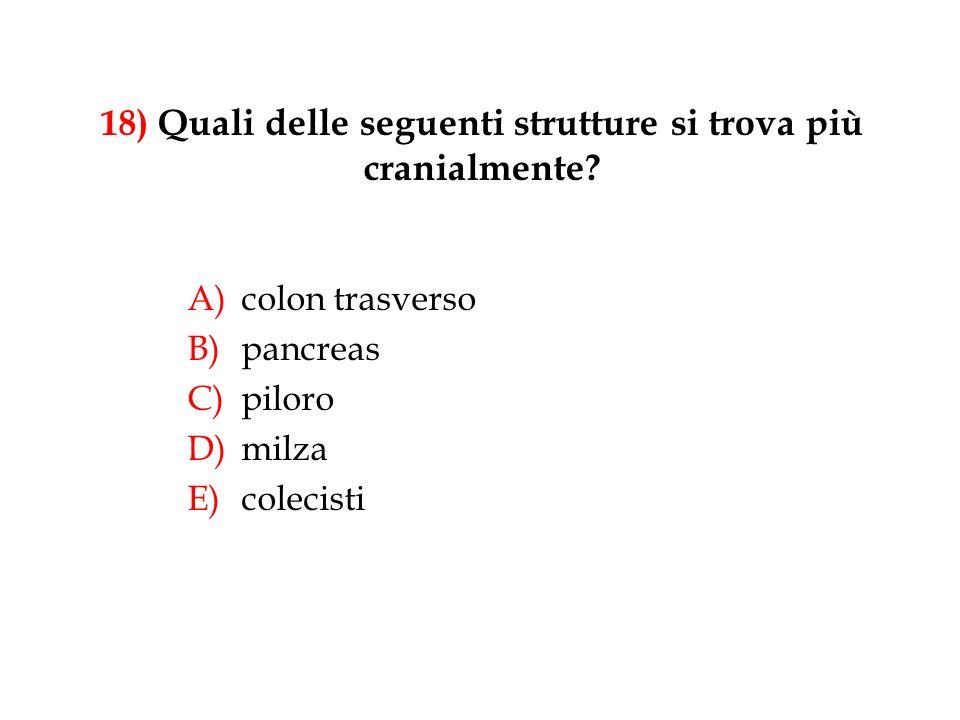 18) Quali delle seguenti strutture si trova più cranialmente