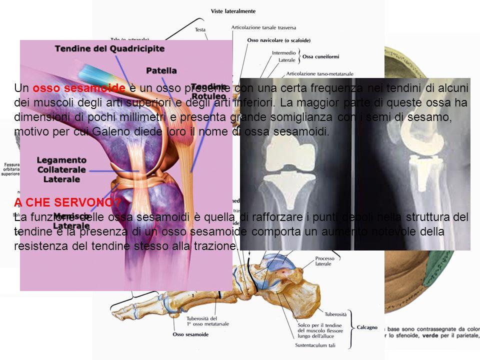 Un osso sesamoide è un osso presente con una certa frequenza nei tendini di alcuni dei muscoli degli arti superiori e degli arti inferiori. La maggior parte di queste ossa ha dimensioni di pochi millimetri e presenta grande somiglianza con i semi di sesamo, motivo per cui Galeno diede loro il nome di ossa sesamoidi.