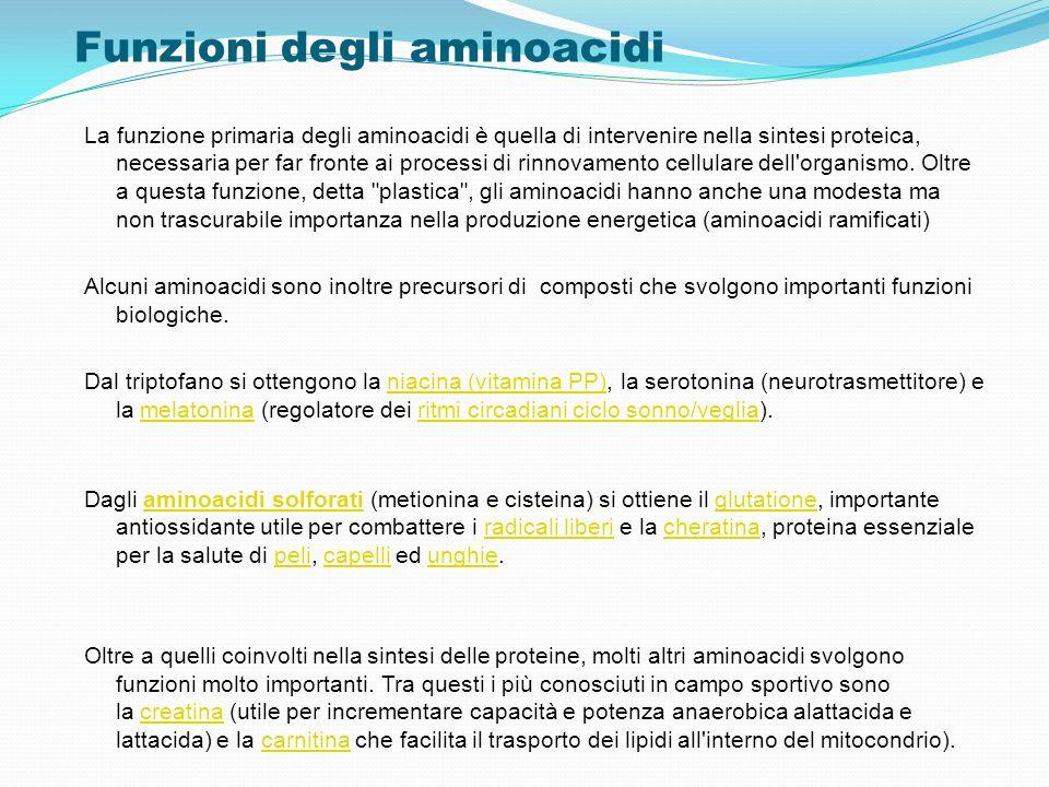 Funzioni degli aminoacidi