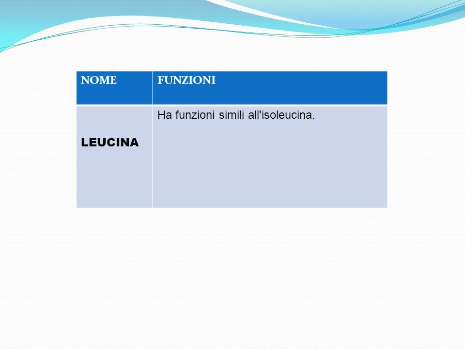 NOME FUNZIONI LEUCINA Ha funzioni simili all isoleucina.