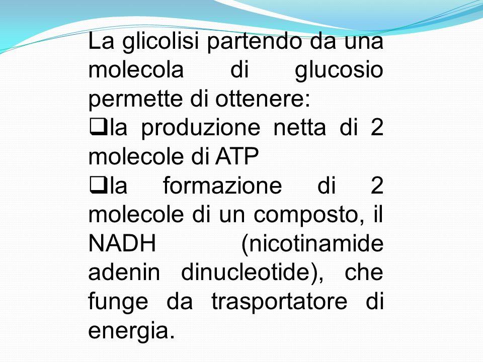 La glicolisi partendo da una molecola di glucosio permette di ottenere:
