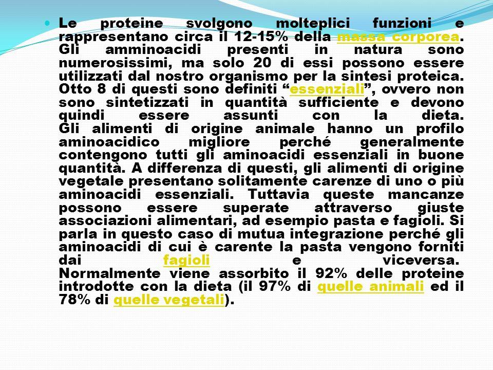Le proteine svolgono molteplici funzioni e rappresentano circa il 12-15% della massa corporea.