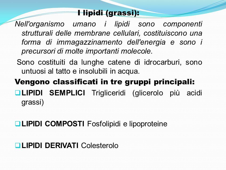 I lipidi (grassi):