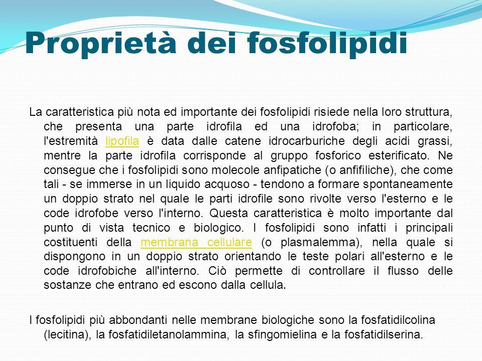 Proprietà dei fosfolipidi