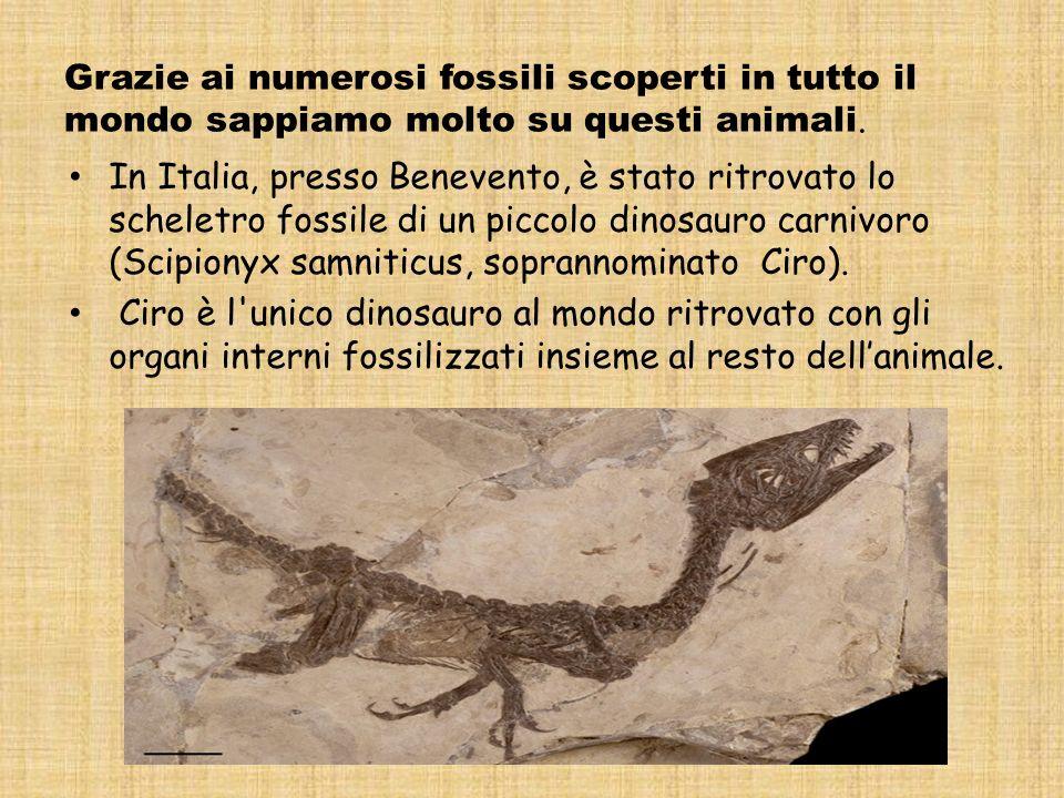 Grazie ai numerosi fossili scoperti in tutto il mondo sappiamo molto su questi animali.