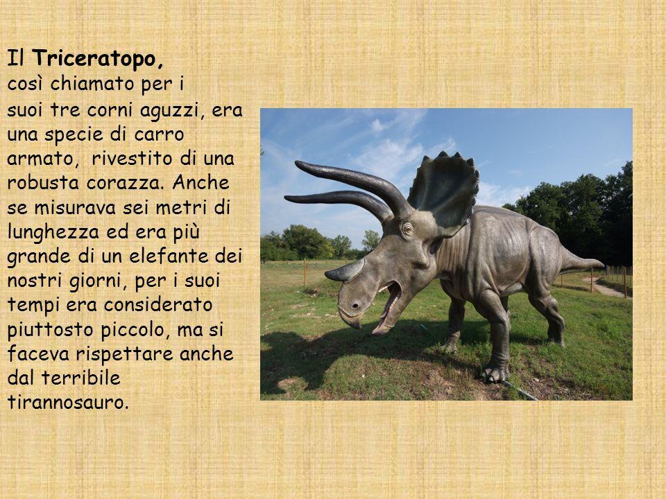 Il Triceratopo, così chiamato per i