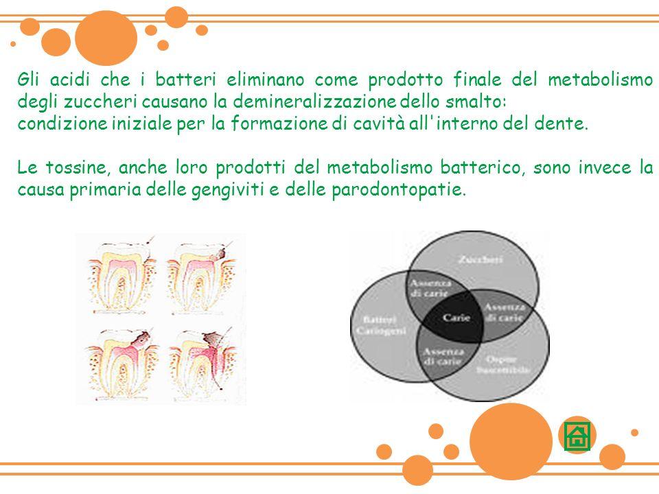 Gli acidi che i batteri eliminano come prodotto finale del metabolismo degli zuccheri causano la demineralizzazione dello smalto: