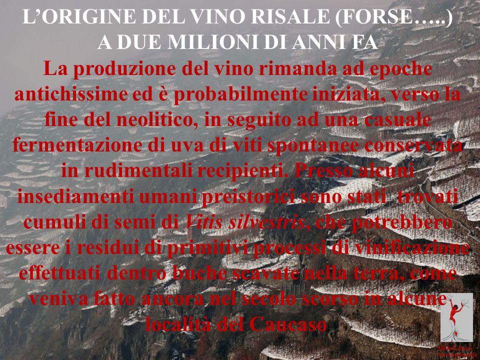 L'ORIGINE DEL VINO RISALE (FORSE…..)