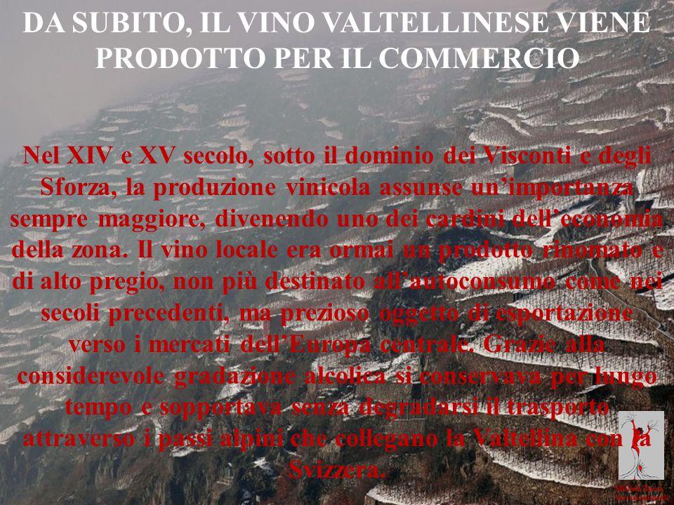 DA SUBITO, IL VINO VALTELLINESE VIENE PRODOTTO PER IL COMMERCIO