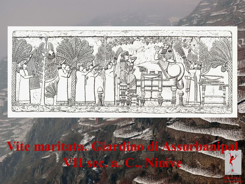 Vite maritata. Giardino di Assurbanipal
