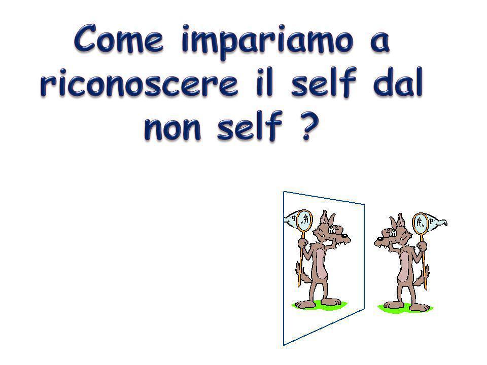 Come impariamo a riconoscere il self dal non self