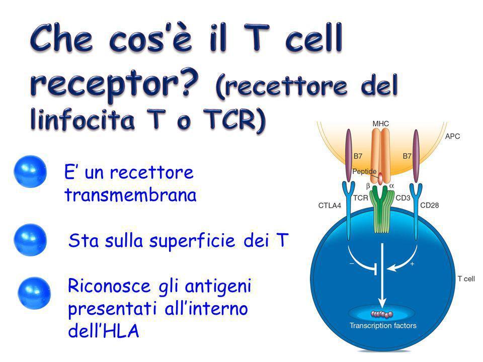 Che cos'è il T cell receptor (recettore del linfocita T o TCR)