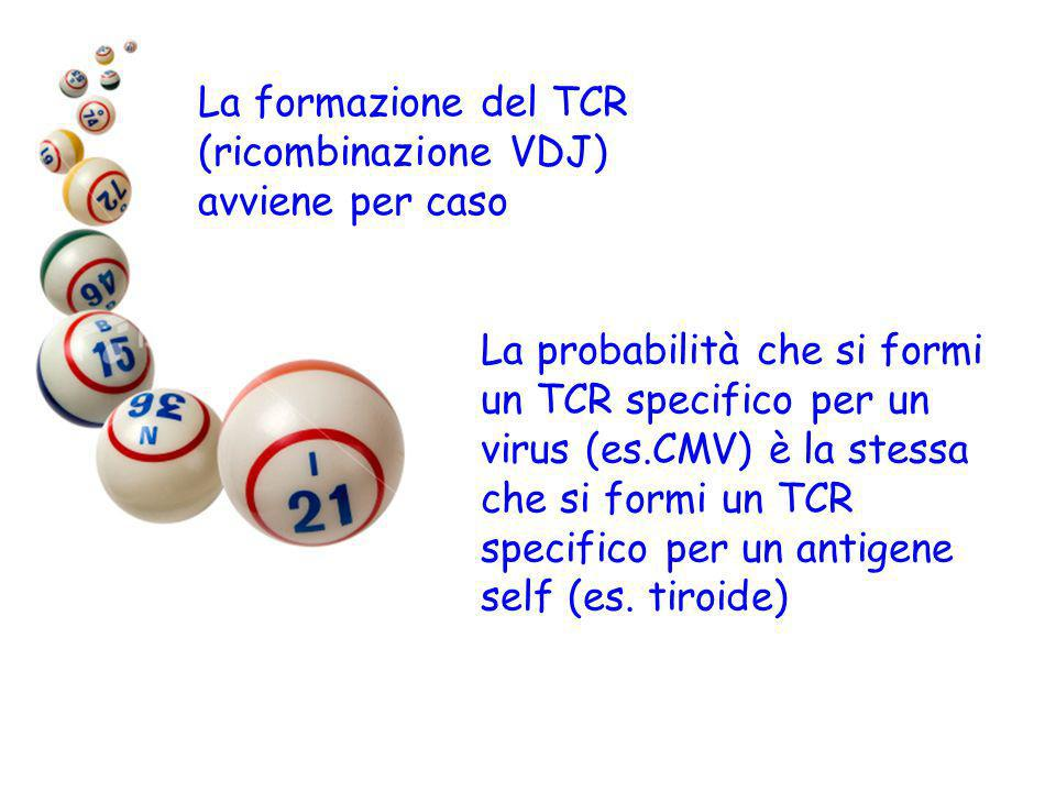 La formazione del TCR (ricombinazione VDJ)
