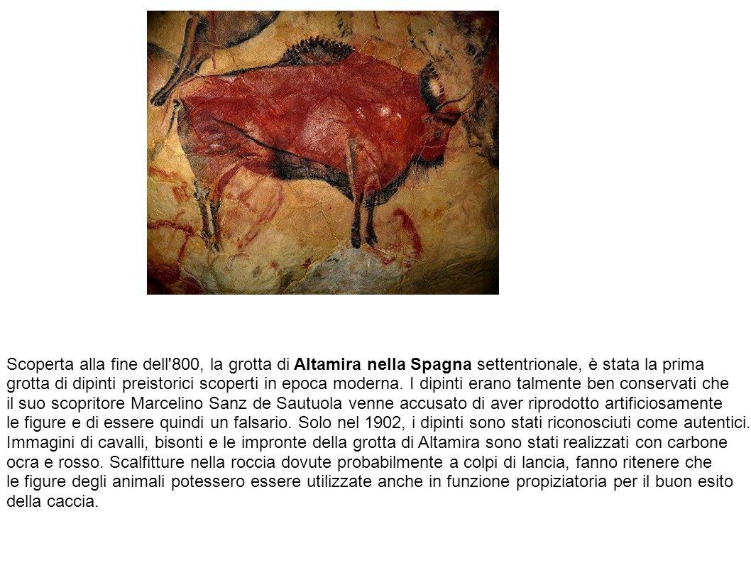 Scoperta alla fine dell 800, la grotta di Altamira nella Spagna settentrionale, è stata la prima