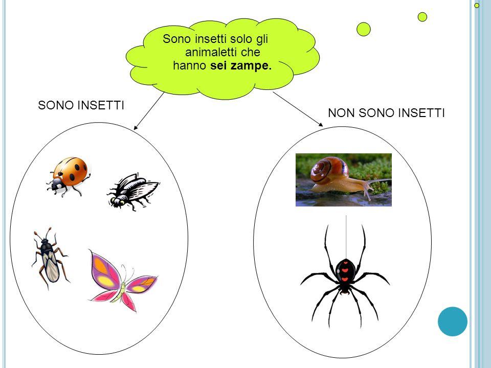 Sono insetti solo gli animaletti che hanno sei zampe.