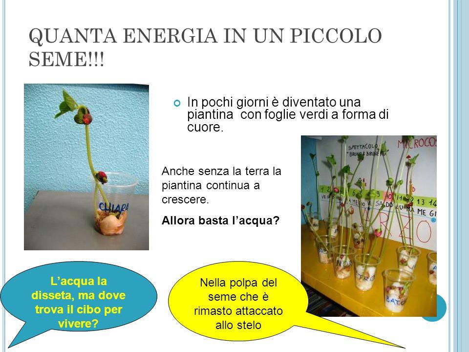 QUANTA ENERGIA IN UN PICCOLO SEME!!!