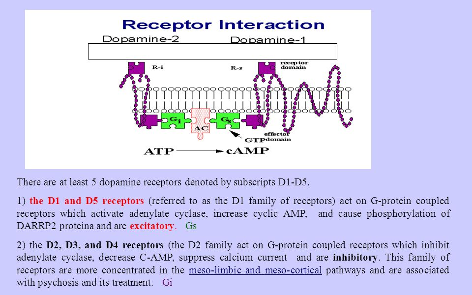 There are at least 5 dopamine receptors denoted by subscripts D1-D5.