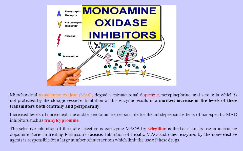 Mitochondrial monoamine oxidase (MAO) degrades intraneuronal dopamine, norepinephrine, and serotonin which is not protected by the storage vessicle. Inhibition of this enzyme results in a marked increase in the levels of these transmitters both centrally and peripherally.