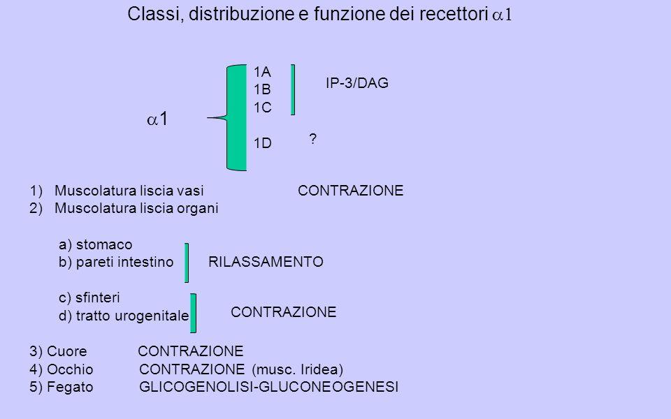 Classi, distribuzione e funzione dei recettori a1
