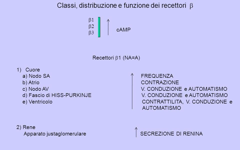 Classi, distribuzione e funzione dei recettori b