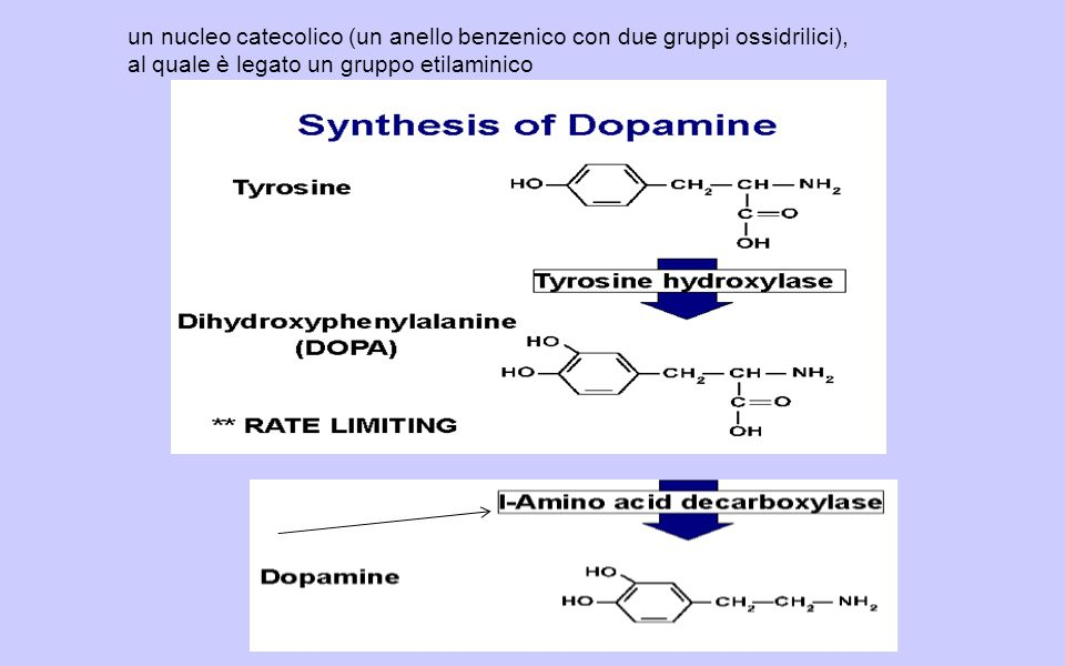 un nucleo catecolico (un anello benzenico con due gruppi ossidrilici),