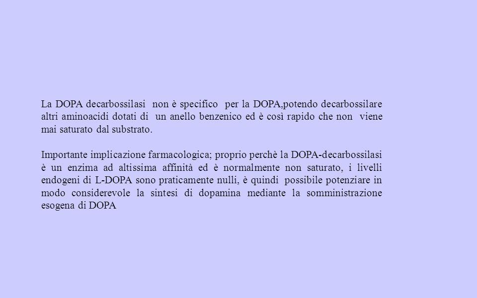 La DOPA decarbossilasi non è specifico per la DOPA,potendo decarbossilare altri aminoacidi dotati di un anello benzenico ed è così rapido che non viene mai saturato dal substrato.