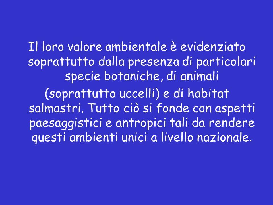 Il loro valore ambientale è evidenziato soprattutto dalla presenza di particolari specie botaniche, di animali