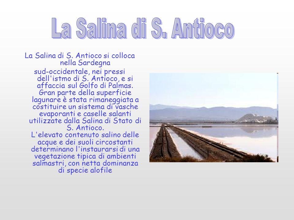 La Salina di S. Antioco si colloca nella Sardegna