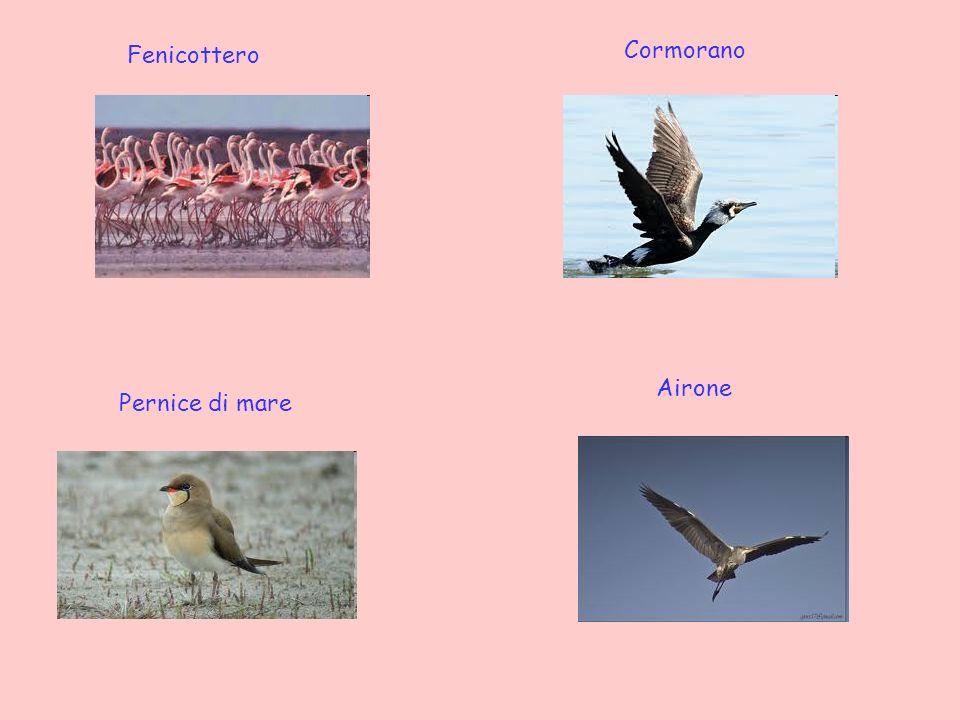 Cormorano Fenicottero Airone Pernice di mare
