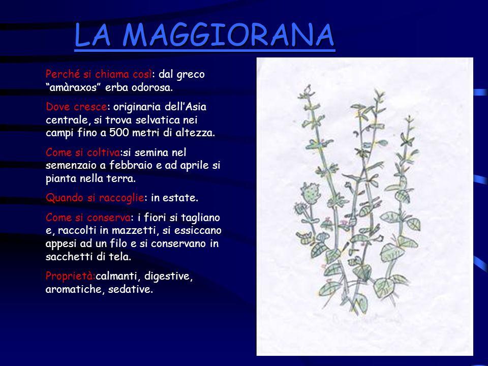 LA MAGGIORANA Perché si chiama così: dal greco amàraxos erba odorosa.