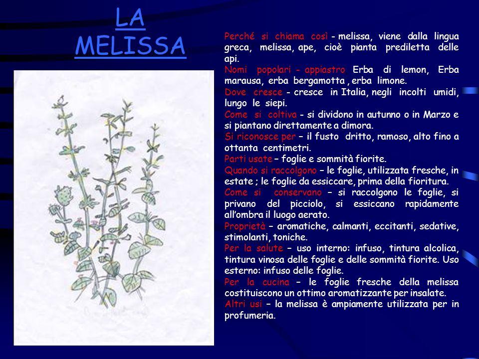 LA MELISSAPerché si chiama così - melissa, viene dalla lingua greca, melissa, ape, cioè pianta prediletta delle api.
