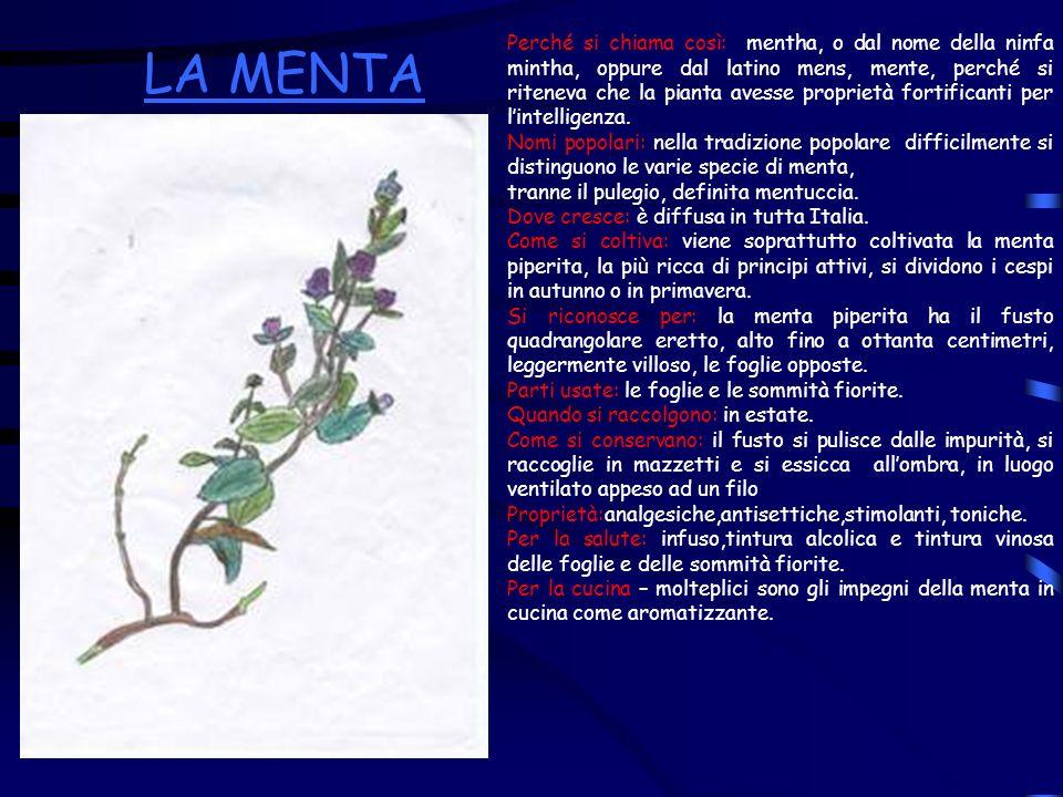 Perché si chiama così: mentha, o dal nome della ninfa mintha, oppure dal latino mens, mente, perché si riteneva che la pianta avesse proprietà fortificanti per l'intelligenza.