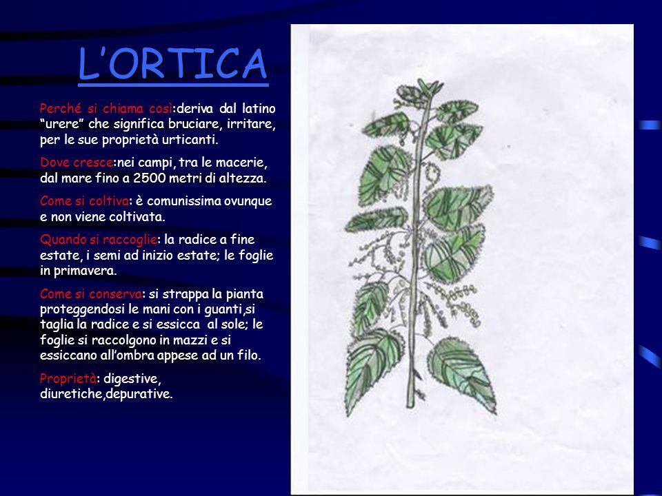 L'ORTICA Perché si chiama così:deriva dal latino urere che significa bruciare, irritare, per le sue proprietà urticanti.