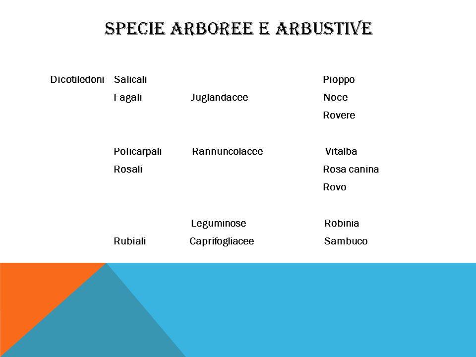 SPECIE ARBOREE E ARBUSTIVE