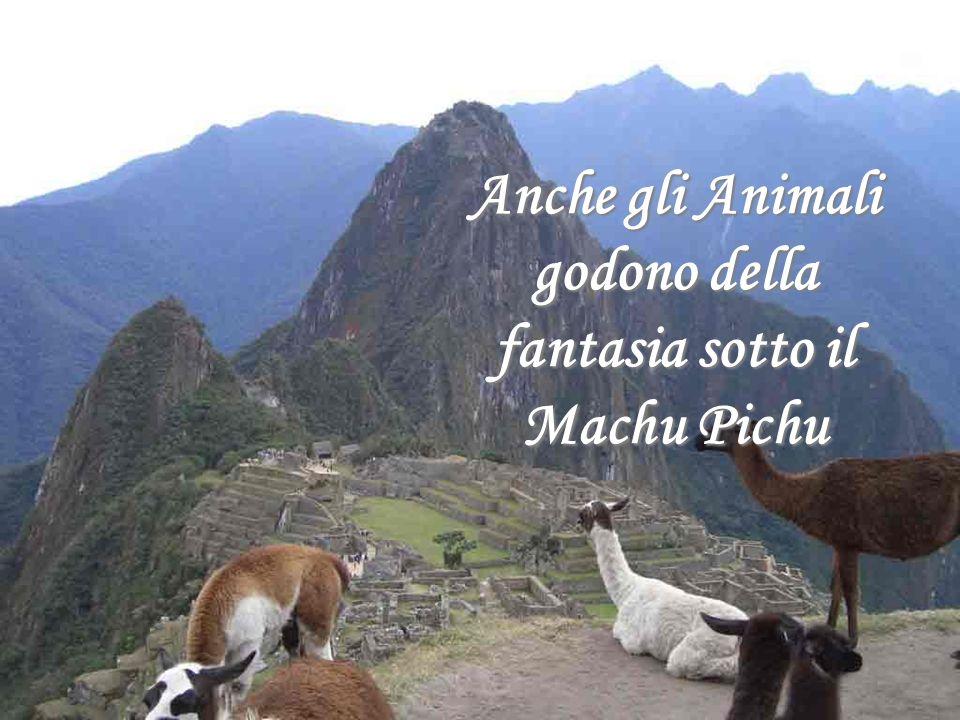 Anche gli Animali godono della fantasia sotto il Machu Pichu