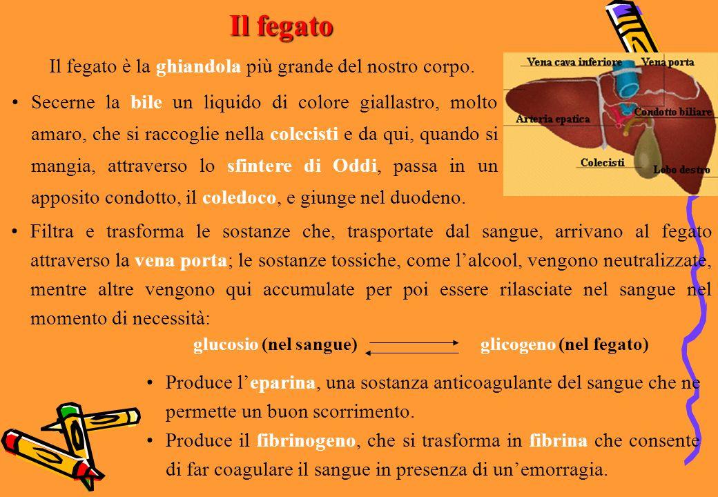 glicogeno (nel fegato)