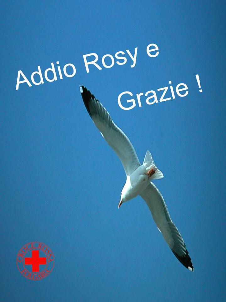 Addio Rosy e Grazie !