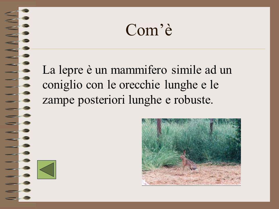Com'è La lepre è un mammifero simile ad un coniglio con le orecchie lunghe e le zampe posteriori lunghe e robuste.