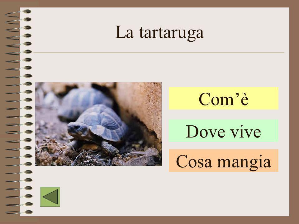La tartaruga Com'è Dove vive Cosa mangia