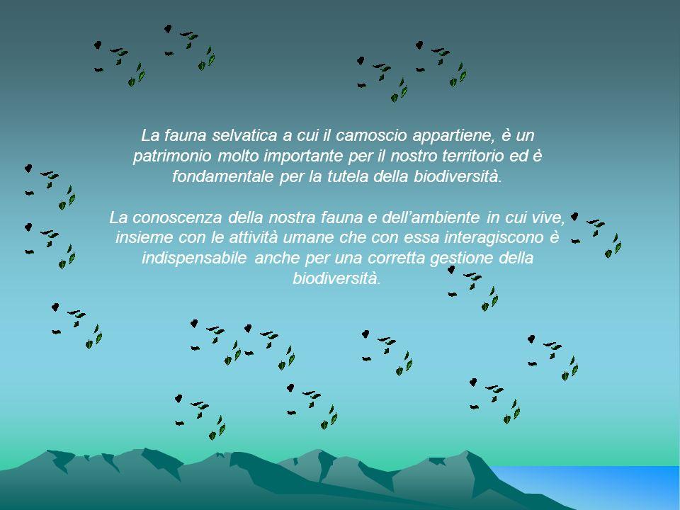 La fauna selvatica a cui il camoscio appartiene, è un patrimonio molto importante per il nostro territorio ed è fondamentale per la tutela della biodiversità.