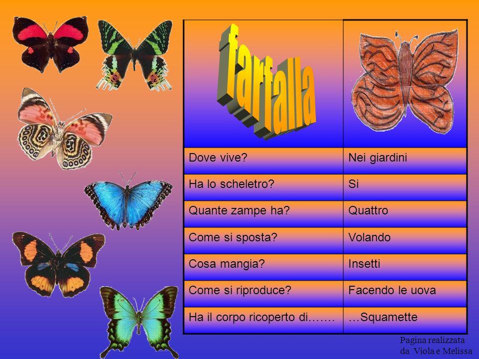 farfalla Dove vive Nei giardini Ha lo scheletro Si Quante zampe ha