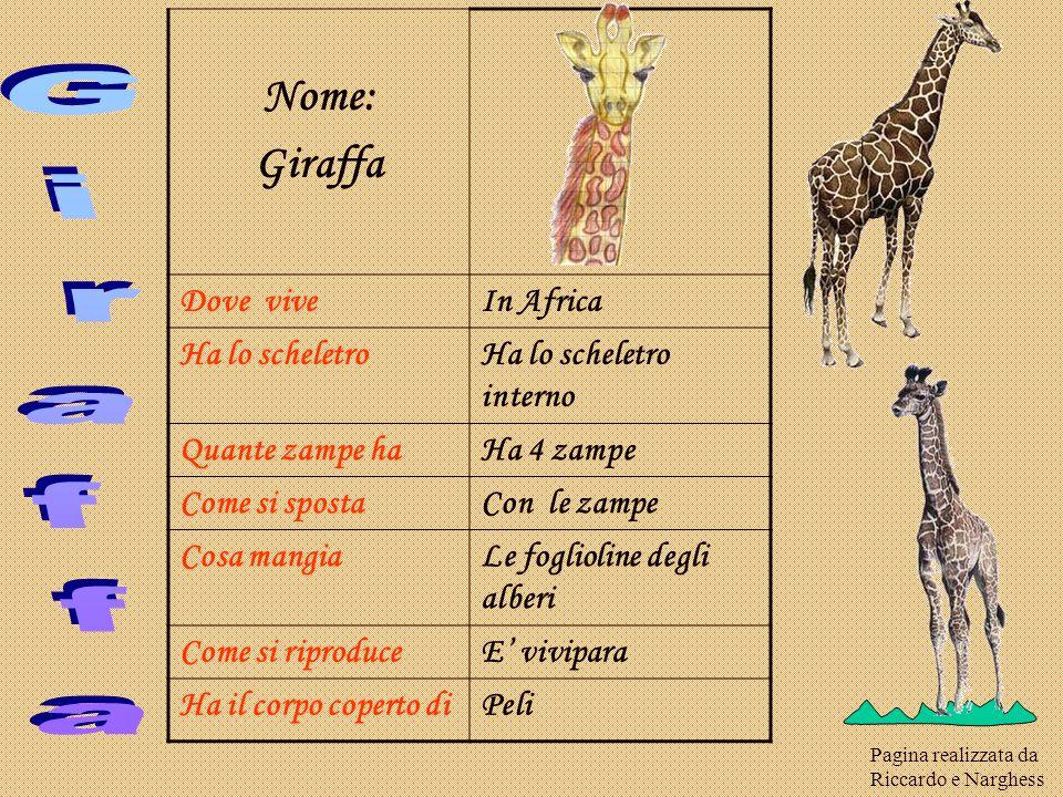 Giraffa Nome: Giraffa Dove vive In Africa Ha lo scheletro