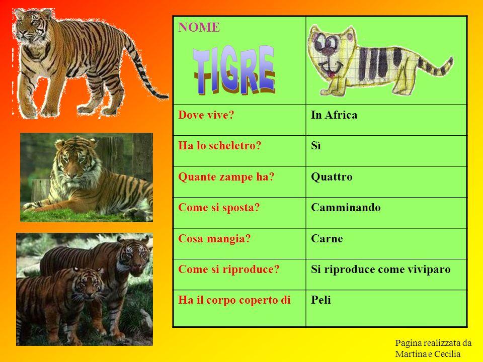 TIGRE NOME Dove vive In Africa Ha lo scheletro Sì Quante zampe ha