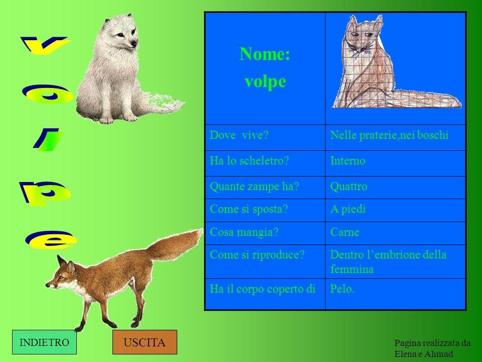 volpe Nome: volpe Dove vive Nelle praterie,nei boschi