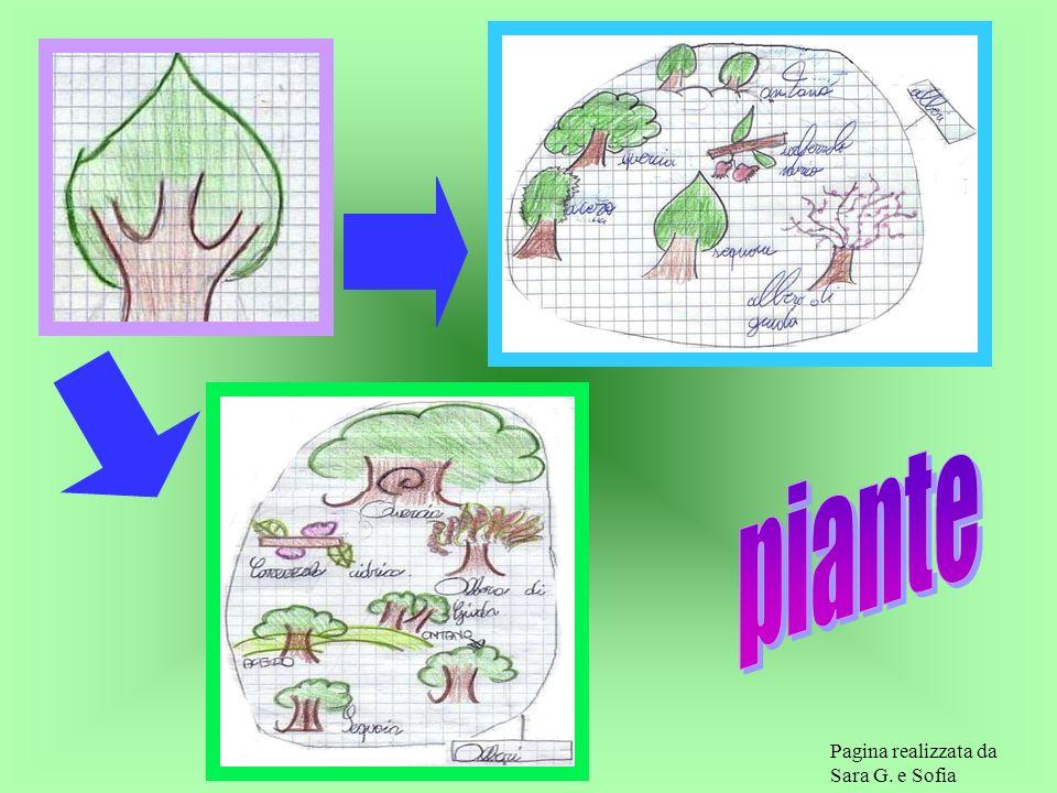 piante Pagina realizzata da Sara G. e Sofia