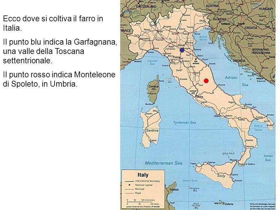 Ecco dove si coltiva il farro in Italia.
