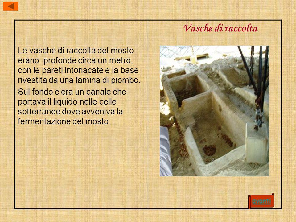 Le vasche di raccolta del mosto erano profonde circa un metro, con le pareti intonacate e la base rivestita da una lamina di piombo.