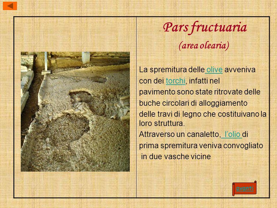 (area olearia) La spremitura delle olive avveniva