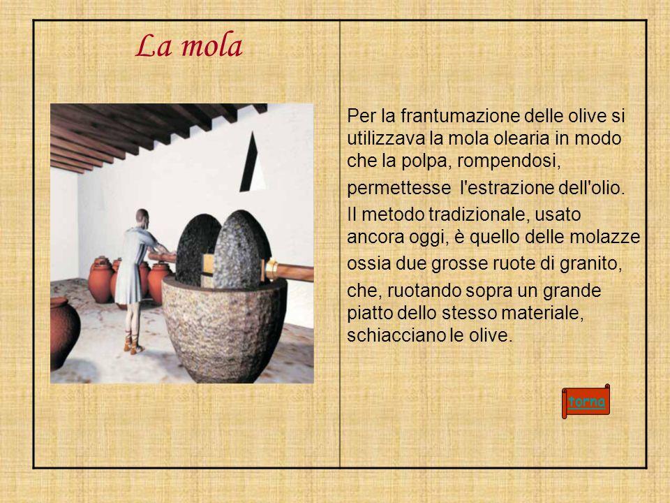 La mola Per la frantumazione delle olive si utilizzava la mola olearia in modo che la polpa, rompendosi,