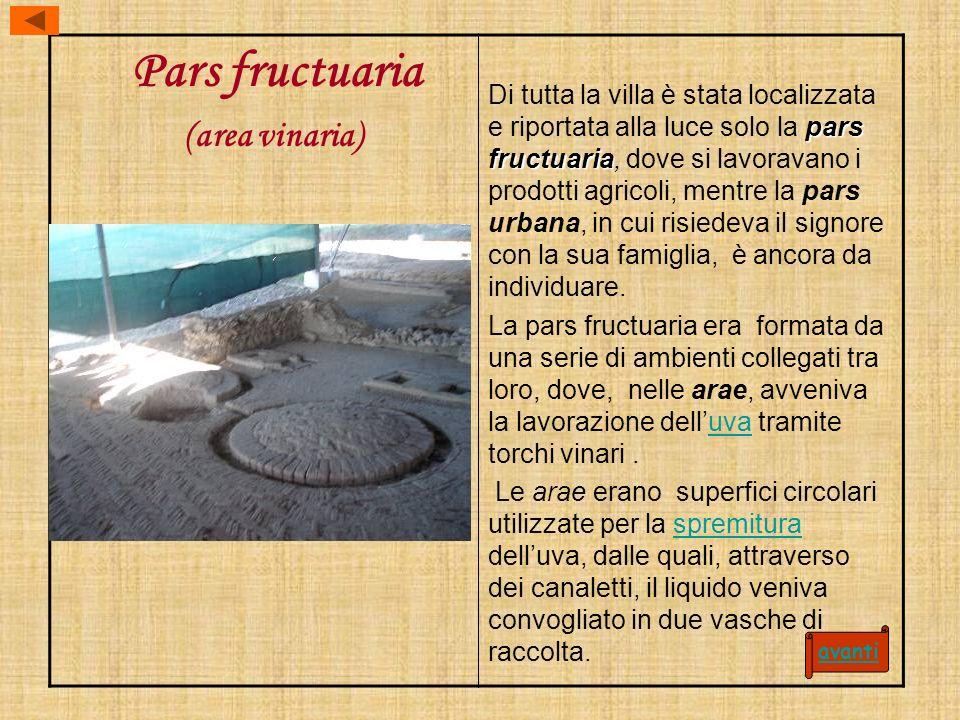 Pars fructuaria (area vinaria)